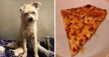 Cachorra que roubou fatia de pizza para filhotes famintos é adotada