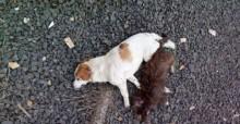 Covardia: cães e gatos morrem com suspeita de envenenamento em Goiânia (GO)
