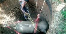Multidão se une para resgatar elefante preso dentro de poço de 6 metros - veja vídeo