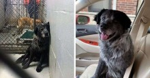 Ao perceber que será adotado, cãozinho entristecido começa a sorrir