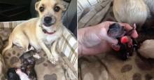 Cachorro dá à luz no banco de trás de carro momentos depois de ser adotada