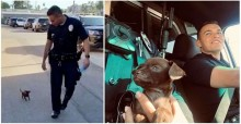 Cachorrinho se torna 'policial' após ser salvo e adotado por dupla de oficiais