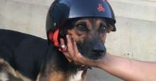 Cachorro de rua é adotado por skatistas e ganha casinha temática em Votuporanga (SP)