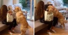 Cachorro tem reação incrível ao ver bebê recém-nascido de tutor pela 1ª vez (veja o vídeo)