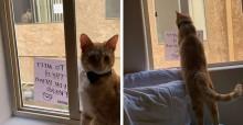 Gatos que ficavam se espionando 'se apaixonam' e donas decidem marcar encontro real