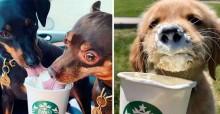 Starbucks cria bebida especial para cães se deleitarem e fotos viralizam