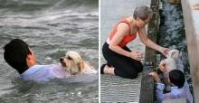 Jovem salta em alto mar da Austrália para resgatar cachorro de uma desconhecida