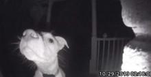Em vídeo super fofo, cãozinho toca campainha para avisar donos que ficou do lado de fora da casa