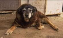 Conheça Maggie, a cachorrinha mais velha do mundo