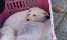 Estudante carioca adota cãozinho no caminho para a prova e chama-o de 'Enem'