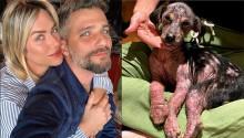 Bruno Gagliasso e esposa resgatam e adotam cachorrinha assustada e doente