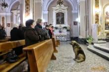 Cachorro vai à missa todos os dias após morte da dona na Itália