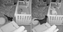 Câmera escondida 'flagra' gato e bebê tendo uma conversa super fofa