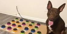 Equipamento impressionante criado por fonoaudióloga ajuda cão a se comunicar (veja o vídeo)