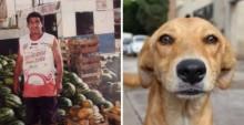 Cãozinho foge de casa e desvenda assassinato de homem desaparecido no Mato Grosso