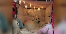 Cachorrinha traumatizada por agressões, ganha nova família e cama especial para se sentir protegida