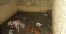 Jovens denunciam morte de cães em 'Abrigo do Terror' em Curionópolis (PA)