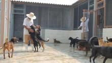 Detentos de bom comportamento são ressocializados com a ajuda de cães de abrigo de SP