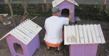 Presidiários montam casinhas para cães de famílias carentes e ONGs de Encantado (RS)