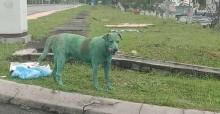 Comoção, revolta e tristeza: cão é tingido com tinta tóxica e adoece