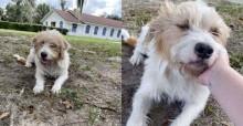 Mulher visita cãozinho todos os dias até ele finalmente deixar ela adotá-lo