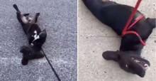 Em vídeo hilário, cachorro 'protesta' com seu dono para continuar passeio: 'Não queria parar' (veja o vídeo)