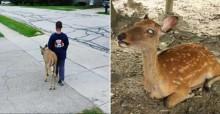 Bondade infantil: todas as manhãs, criança ajuda 'Bambi' cego a se alimentar e viraliza