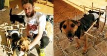 Para melhorar vida de cães de rua deficientes, estudante inventa cadeira de rodas especial