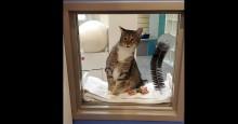 Humor: Internautas pedem #GatinhoLivre após 'prisão' de gato líder de grupo fujão de abrigo