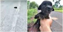 Rapaz resgata filhote cego, faminto e doente abandonado e relata sua indignação na internet
