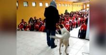 Cachorro invade palco, 'canta' ao lado de saxofonista e leva crianças ao delírio (veja o vídeo)