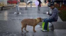 Balões são amarrados em cães de rua em campanha emocionante de conscientização - veja o vídeo