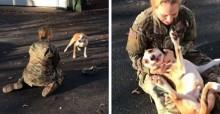 Maior sonho de cão se torna realidade: ele reencontra sua dona que voltou do Exército (veja o vídeo)