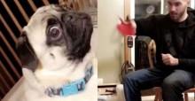 Namorados testam kit de mágica com cão pug e sua reação é a melhor - veja