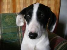 Após ser avisado por comerciante sobre paradeiro de seu cão, idoso se emociona com reencontro (veja o vídeo)