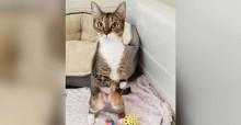 Gatinha que nasceu com deficiência aprende sozinha a ficar em pé como um ser humano