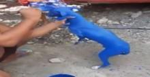 Homem que coloriu cão de azul é detido por polícia e terá de explicar a situação diante de um juiz