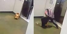 Rapaz salva cachorro que iria morrer enforcado em elevador (veja vídeo)