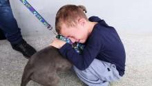 Menino de 7 anos desesperado com roubo de seu cão, o reencontra com ajuda de policiais do PR