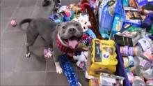 ONG coloca presentes embaixo de árvore de Natal e deixa seus pets escolherem mimos (veja o vídeo)