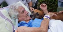 Após seu dono de 86 anos ser internado, cão chorava todos os dias e hospital organiza reencontro