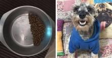Deu dó: cão adotado economiza ração em seu potinho devido a sequelas de traumas antigos