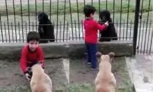 Pureza de coração: em vídeo tocante, criança divide ração do seu pet com cão de rua