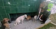 Após se sensibilizar com sofrimento de cães de rua, Polícia cria comedouros e cães fazem fila