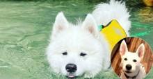 Tosador tosa cão por engano e animal é obrigado a usar protetor solar