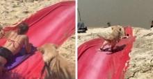 Maior alegria: Cão golden retriever descobre toboágua em praia e 'pira' brincando