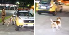 Melhor amigo do homem: cão vira lata chora ao ver dono ser levado por carro da polícia