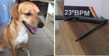 Moradores de cidade do Mato Grosso denunciam homem que atirou em cãozinho com arma
