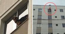 Em MG, cão sozinho em apartamento sobe em janela para ver o movimento e não consegue voltar
