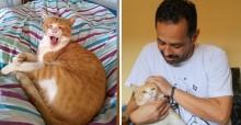 Sem levantar suspeitas, gatinho mantém vida dupla e engana duas famílias para ganhar ração